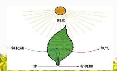 光合作用仪的相关概述