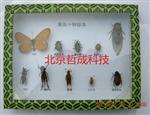 害虫十种标本、农作物害虫标本