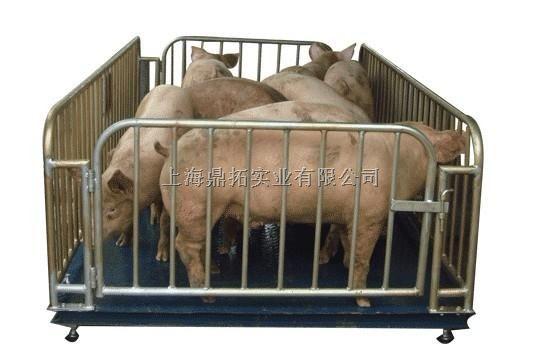 威海动物体重秤,带栏的动物电子秤
