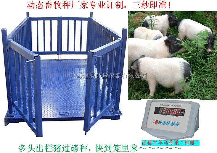 动物称重畜牧秤,上海畜牧秤厂家