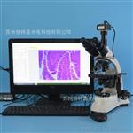 S500T-T510型電子生物顯微鏡 科研高校用光學顯微鏡 USB2.0相機